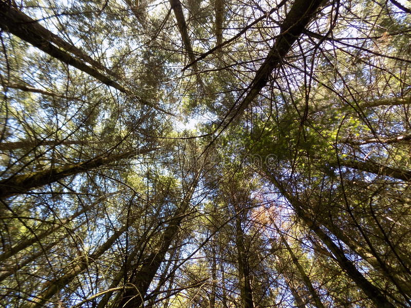 Forest Canopy royaltyfri bild