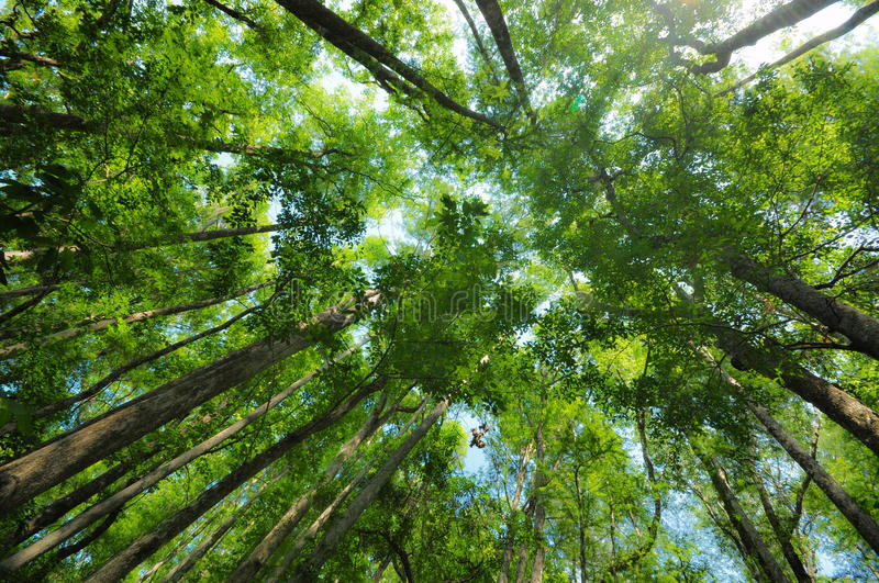 Forest Canopy Lookup stock photos