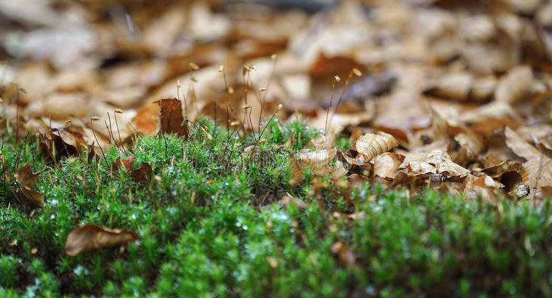 Forest carpet stock photography