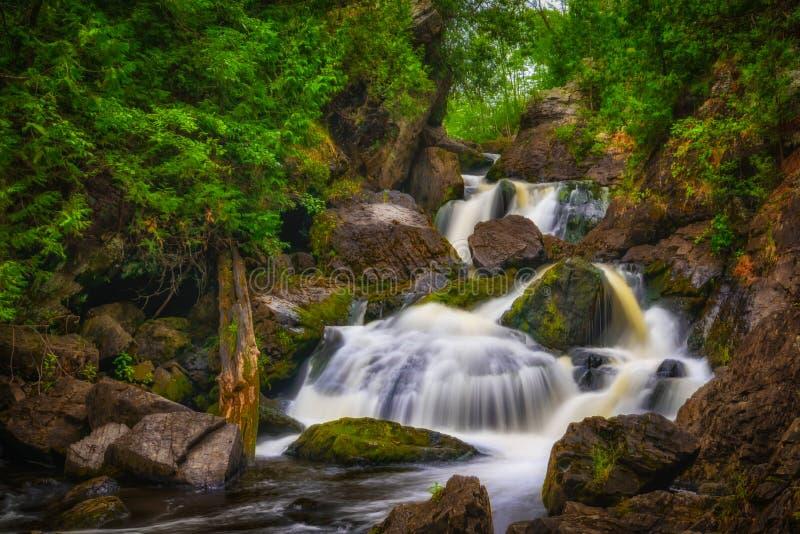 Forest Cascade arkivfoton