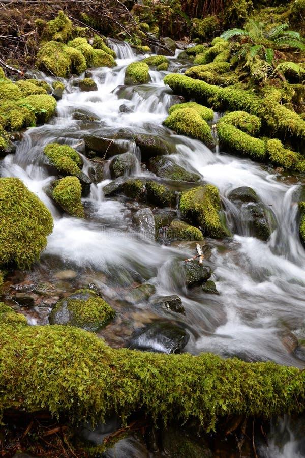 Forest Cascade fotografia stock libera da diritti