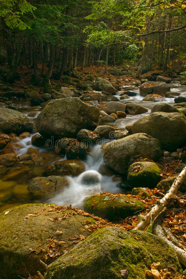 Forest Cascades stock photography