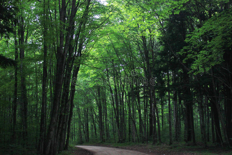 Forest Cathedral immagine stock libera da diritti
