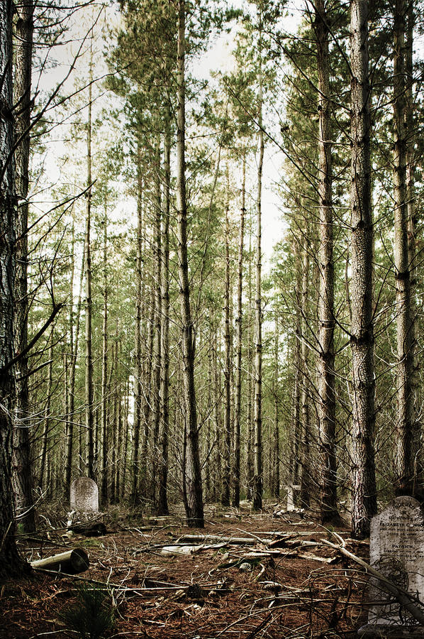 Download Forest Cemetary stock photo. Image of landscape, beech - 14472316