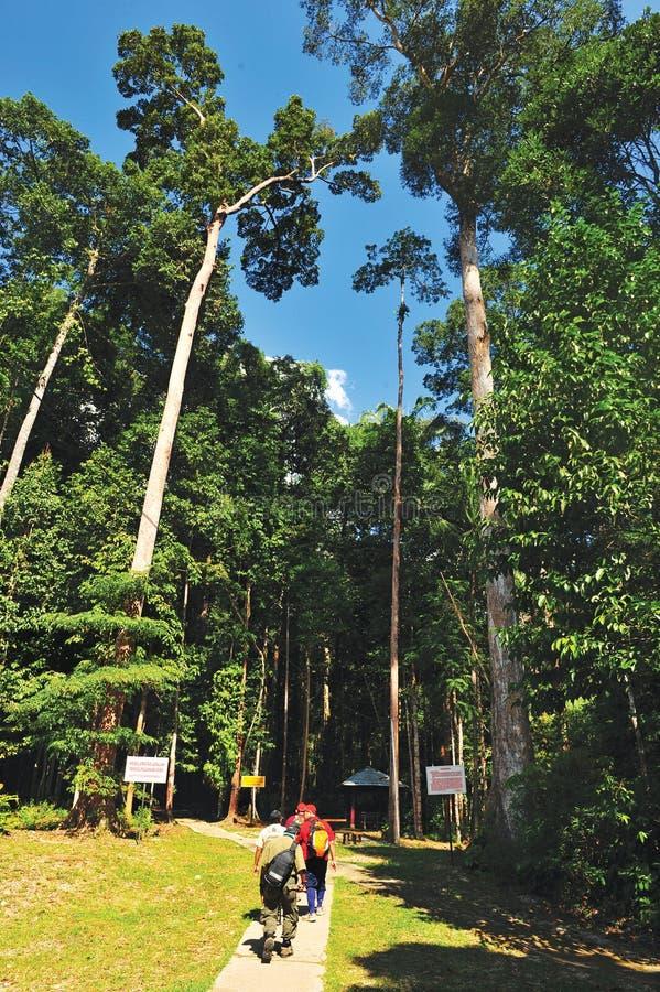 Forest Chemerong foto de stock