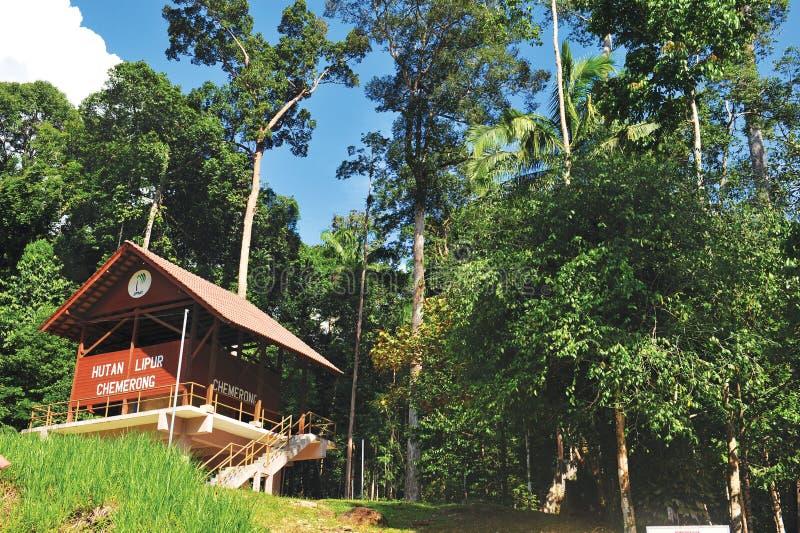 Forest Chemerong imagem de stock royalty free