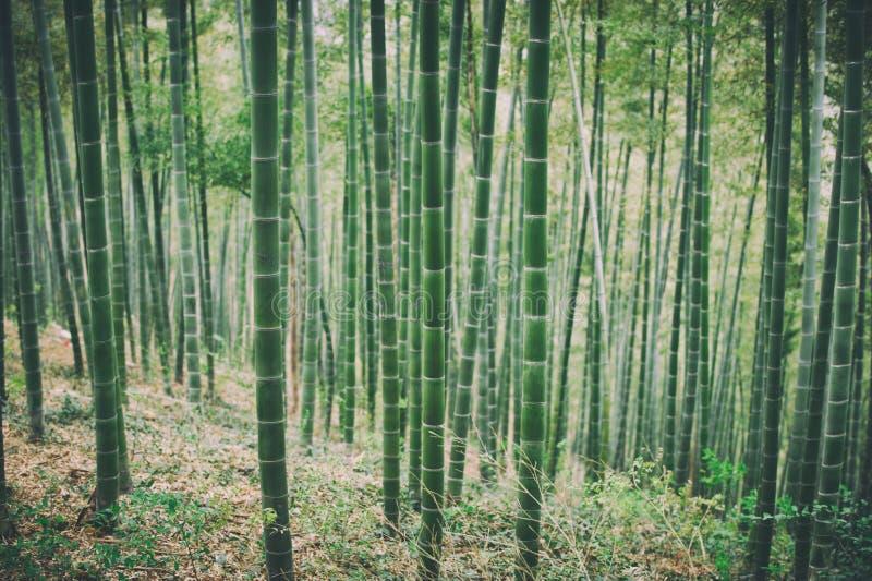 Forest In China de bambú verde fotos de archivo