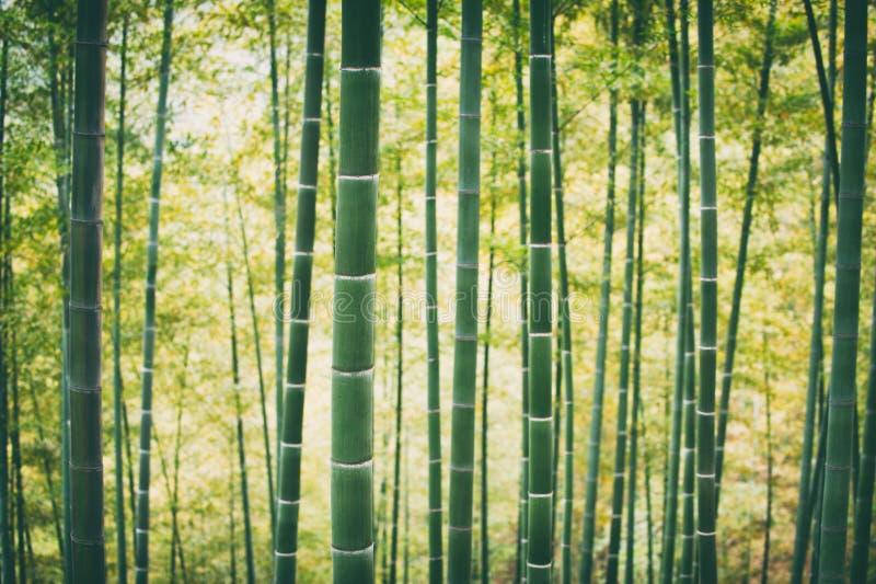 Forest In China de bambú verde fotografía de archivo libre de regalías
