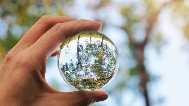Forest in the clear glass marble. Save the world. Save the earth. royalty free stock photography