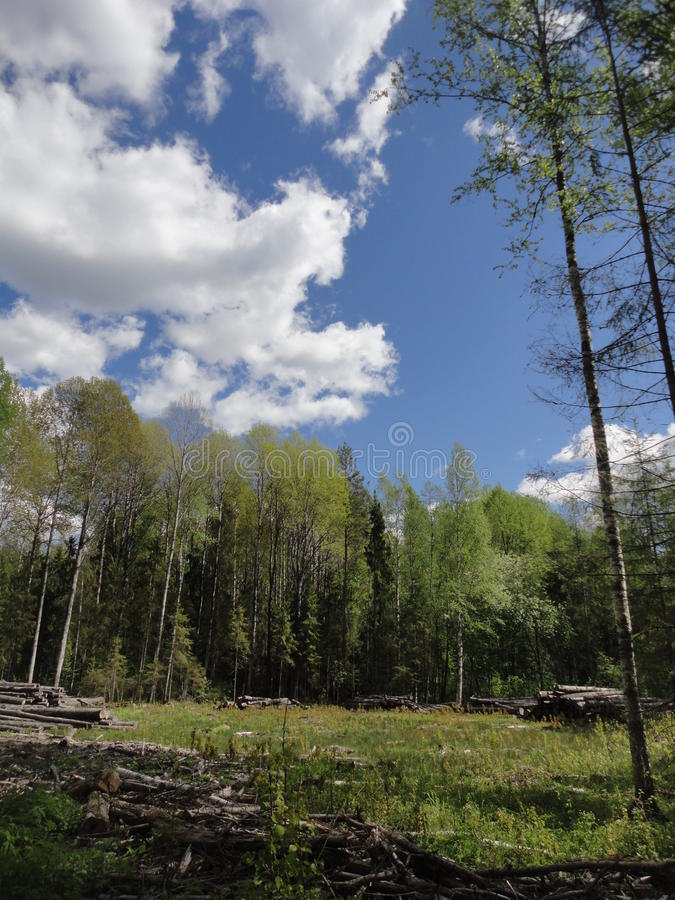 Forest Clearing fotografia de stock