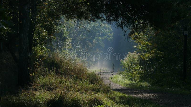 Forest Clearing Brilham no amanhecer poland imagem de stock