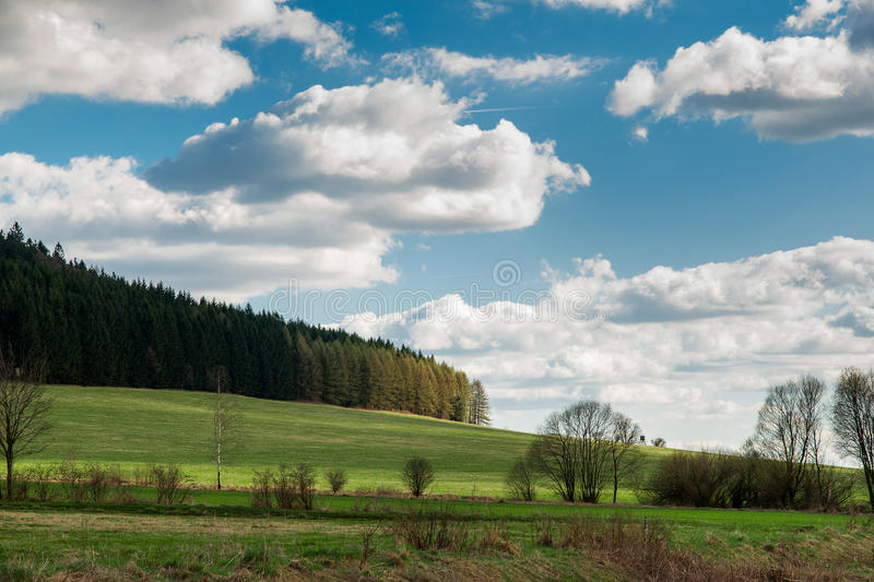 Forest and cloudy blue sky stock image