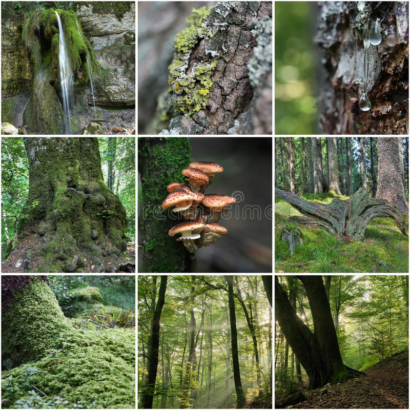Download Forest Collage stock image. Image of background, flora - 33327101