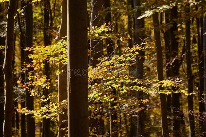 Autumn forest sunshine stock photography