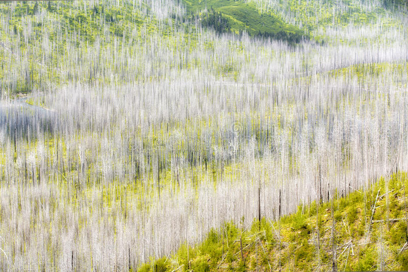 Forest colors royalty free stock photos