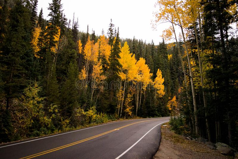 Forest And Concrete Road Free Public Domain Cc0 Image