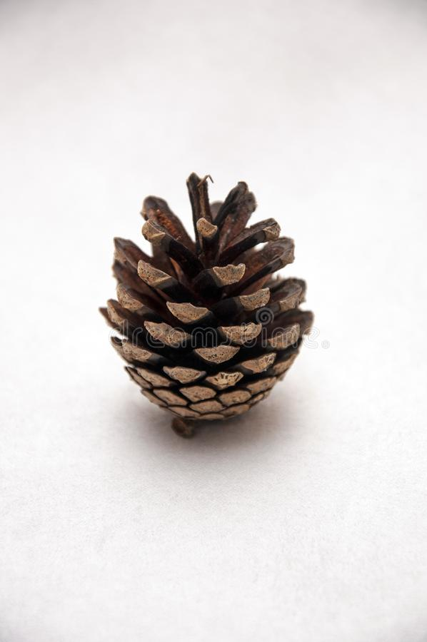 Forest cone. stock images