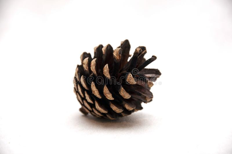 Forest cone. stock photography