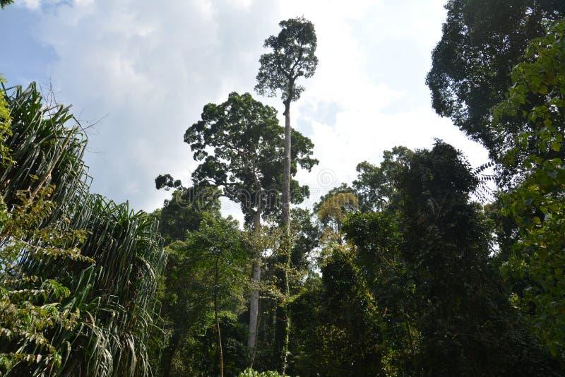 Forest Conservation royaltyfri bild