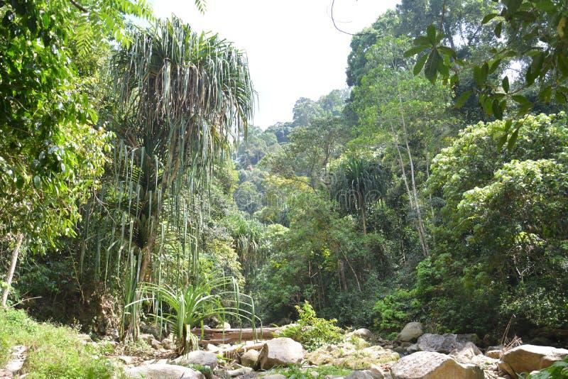 Forest Conservation royaltyfria foton