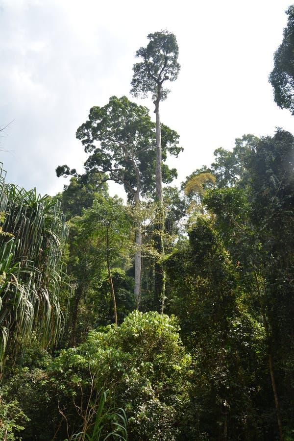 Forest Conservation royaltyfri foto