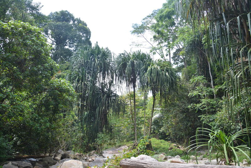 Forest Conservation arkivfoto