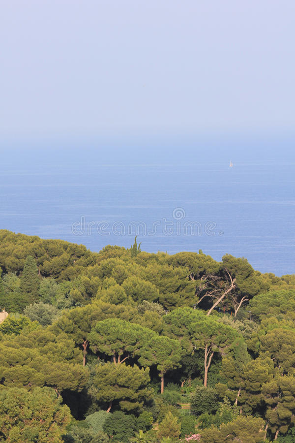 Forest On Cote D Azur Stock Image