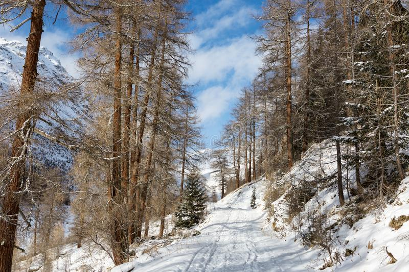 Forest country road among the mountains in a winter sunny morning near Guarda Village, Lower Engadine, Graubunden, Switzerland.  royalty free stock images