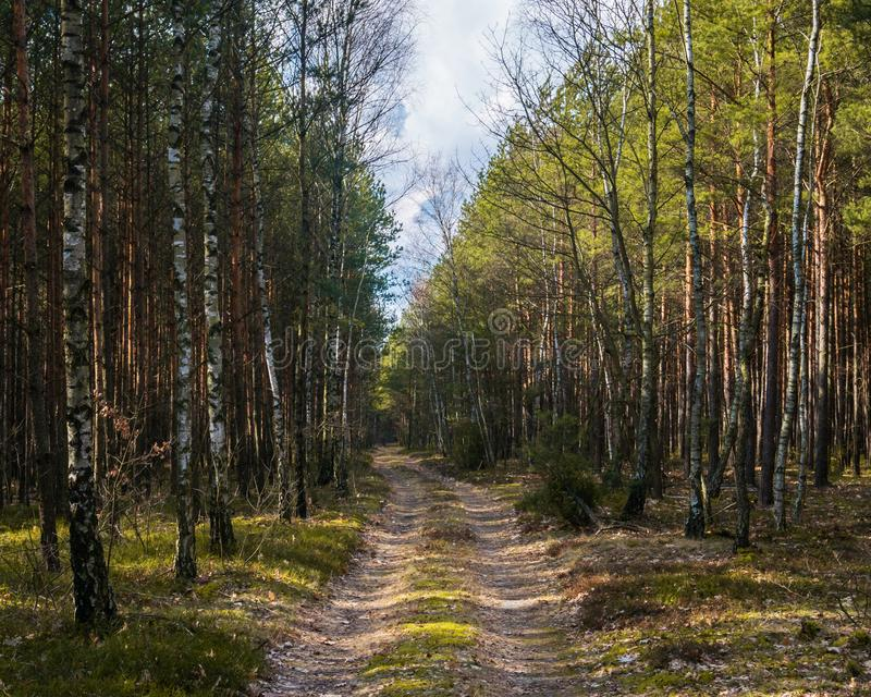 Forest in the countryside in Europe stock image