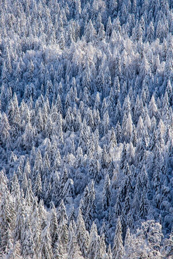 Forest covered in snow, Bohinj valley. Beautiful mountains in Triglav national park, Slovenia stock image