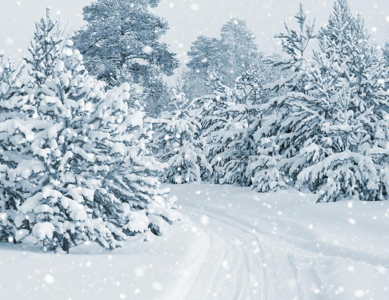 Forest covered with snow royalty free stock image