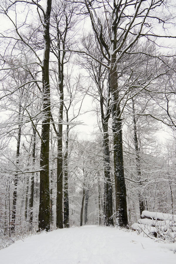 Free Forest Covered With Snow Stock Photo - 33270940