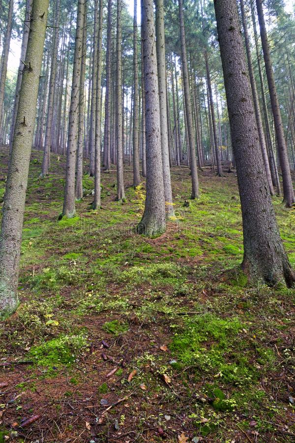 Free Forest Covers Moss Royalty Free Stock Photography - 79904237