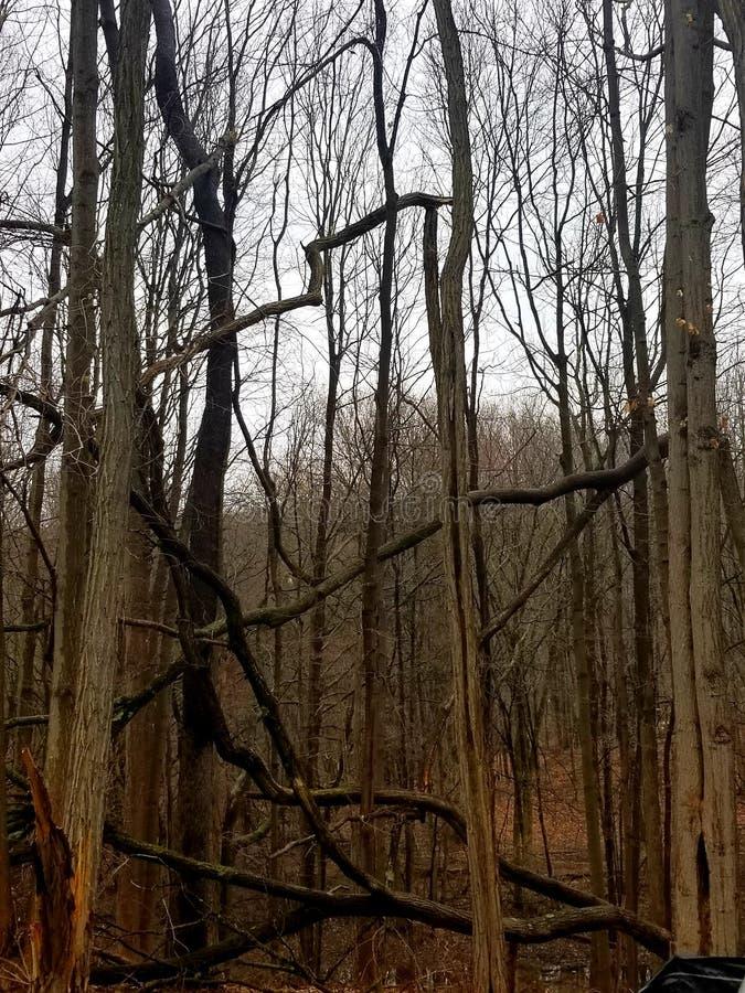 Forest Creatures stock afbeeldingen