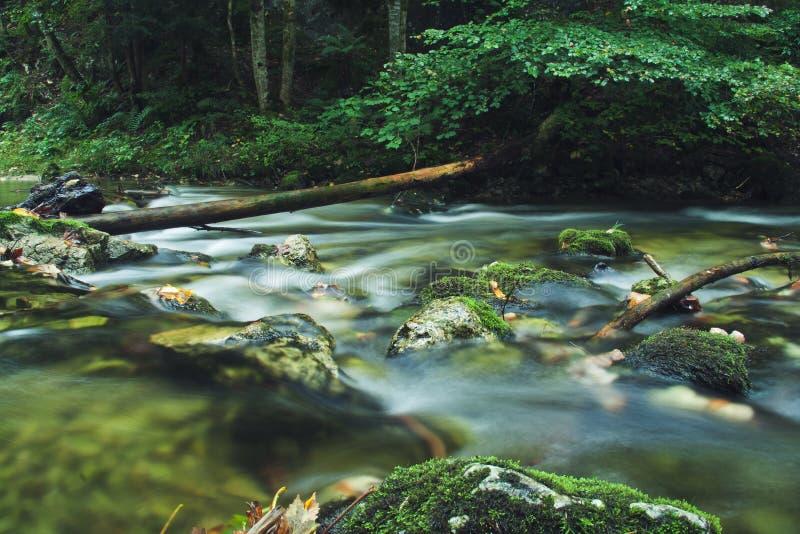 Forest Creek fotos de archivo libres de regalías