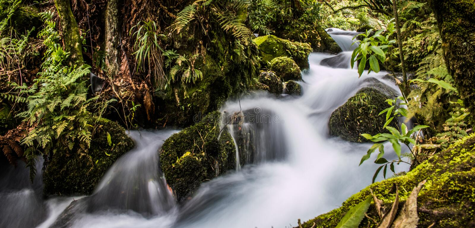 Forest Creek photographie stock