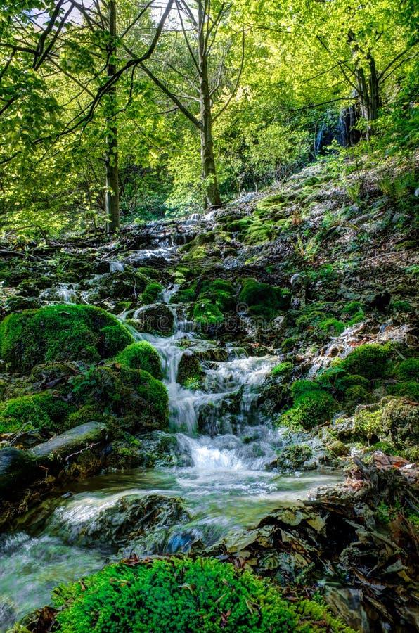 Forest Creek image libre de droits