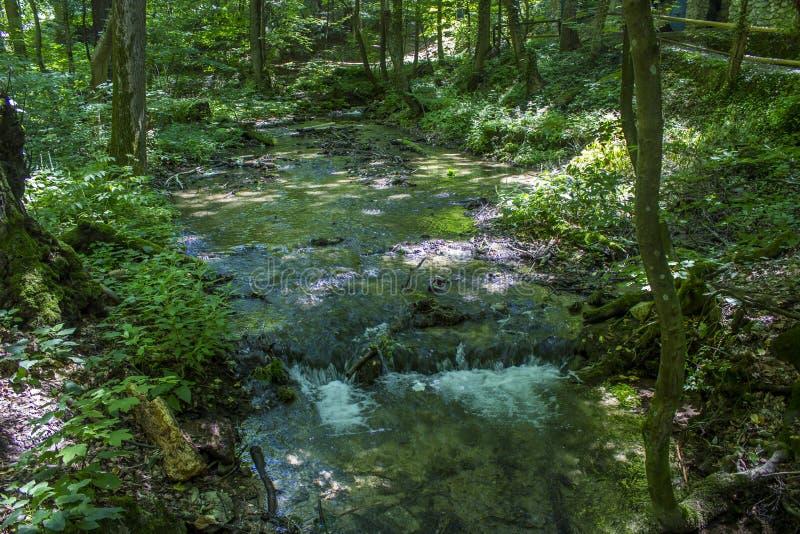 Forest Creek stock foto
