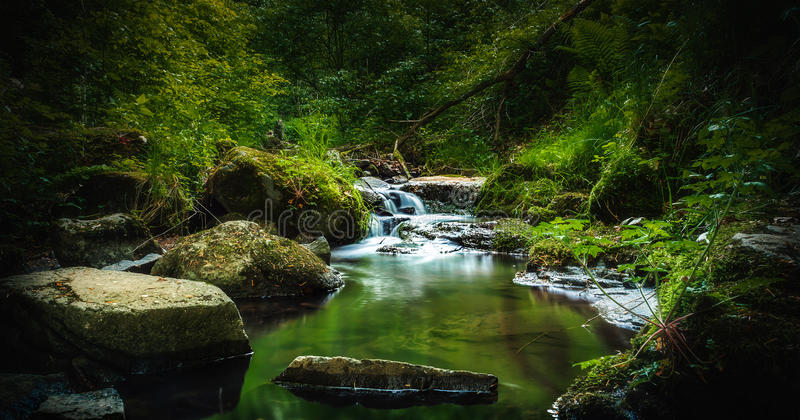 Forest Creek royalty-vrije stock afbeeldingen
