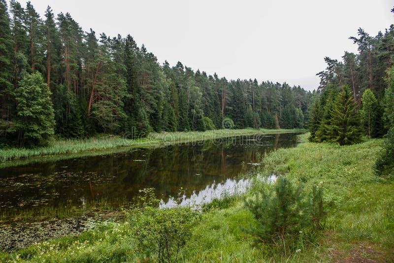 Forest Creek images libres de droits