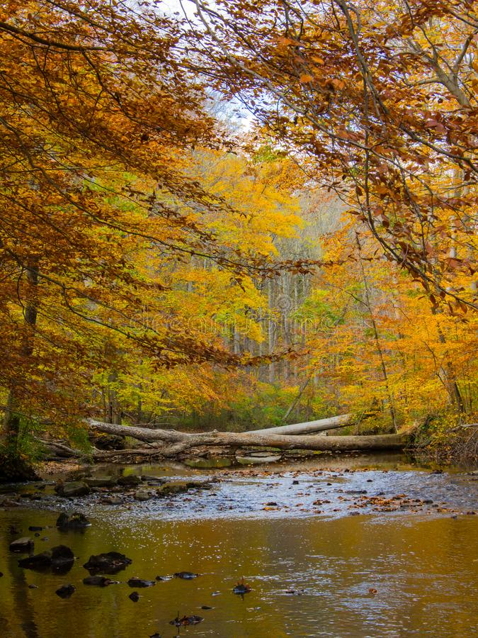 Forest Creek in Autumn, Pennsylvania Woodland, Ridley Creek State Park. A Pennsylvania forest with a creek in autumn, Ridley Creek State Park stock photography