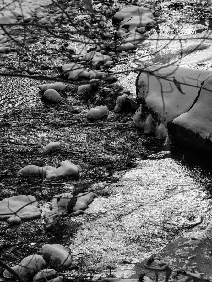 Forest Creek en hiver, noir et blanc images stock