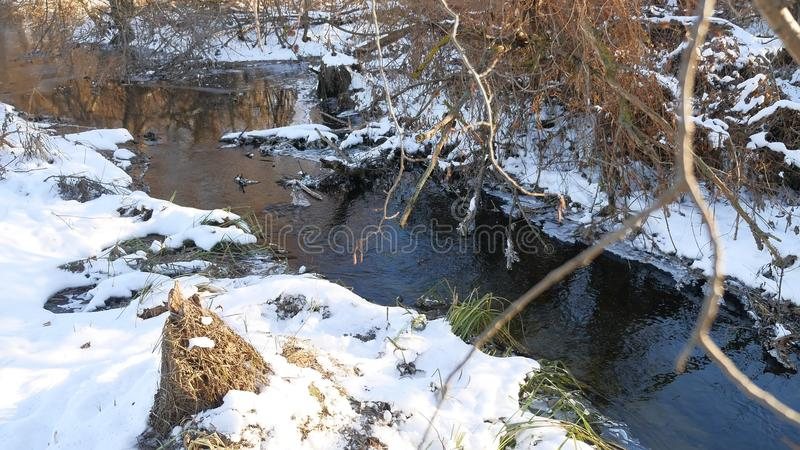 Forest creek flowing grass in the forest nature late beautiful winter landscape dry tree branches. Forest creek flowing grass in forest nature late beautiful stock images