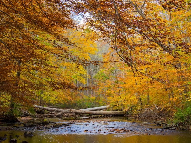 Forest Creek i höst, Pennsylvania skogsmark, Ridley Creek State Park royaltyfri fotografi