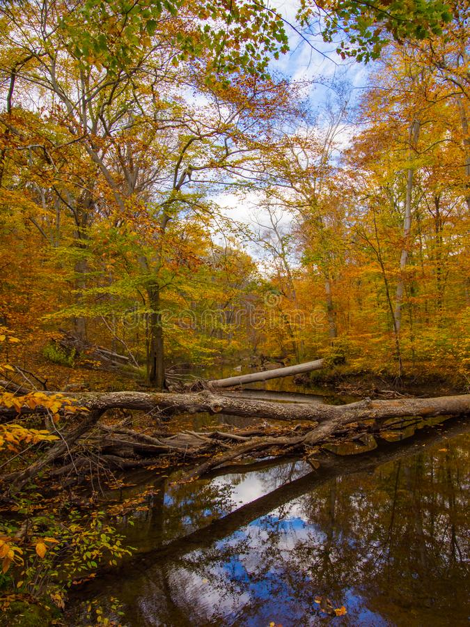 Forest Creek im Herbst, Pennsylvania-Waldland, Ridley Creek State Park lizenzfreies stockbild