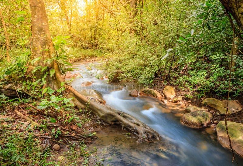 Forest creek in Rincon de la Vieja National Park in Costa Rica. Long exposure image of a small stream in Rincon de la Vieja National Park in Costa Rica stock photo