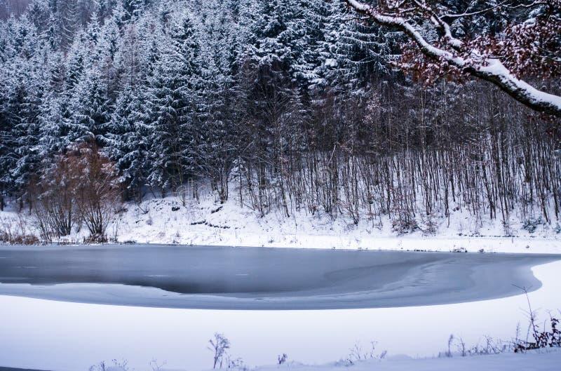 Forest in Czech Rebublic,. Dark and foggy forest near Lelekovice, Czech Republic, Europe stock photo