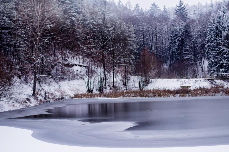 Forest in Czech Rebublic,. Dark and foggy forest near Lelekovice, Czech Republic, Europe stock photography
