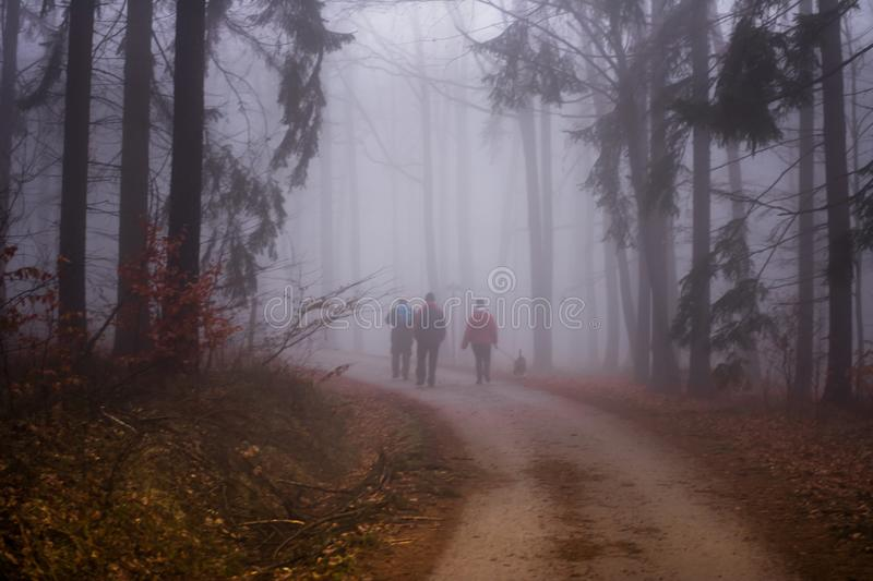 Forest in Czech Rebublic,. Dark and foggy forest near Lelekovice, Czech Republic, Europe stock images