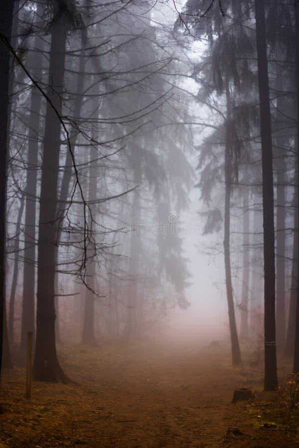 Forest in Czech Rebublic,. Dark and foggy forest near Lelekovice, Czech Republic, Europe royalty free stock image